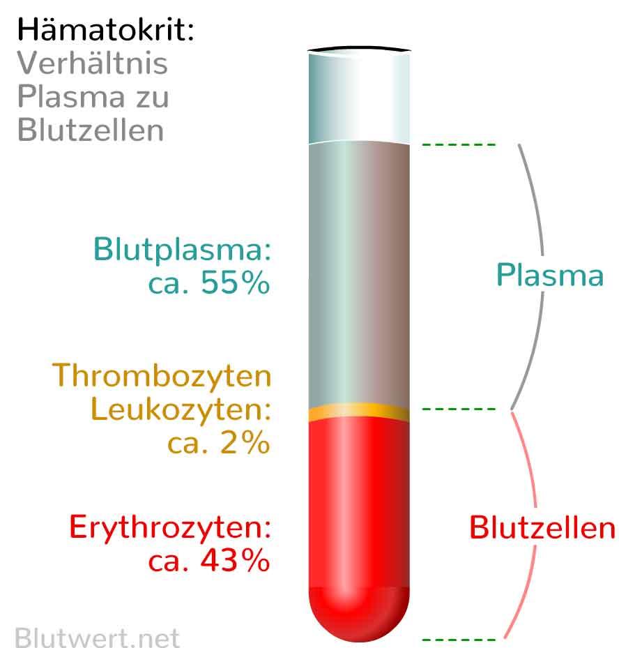 Blutwerte Auswerten