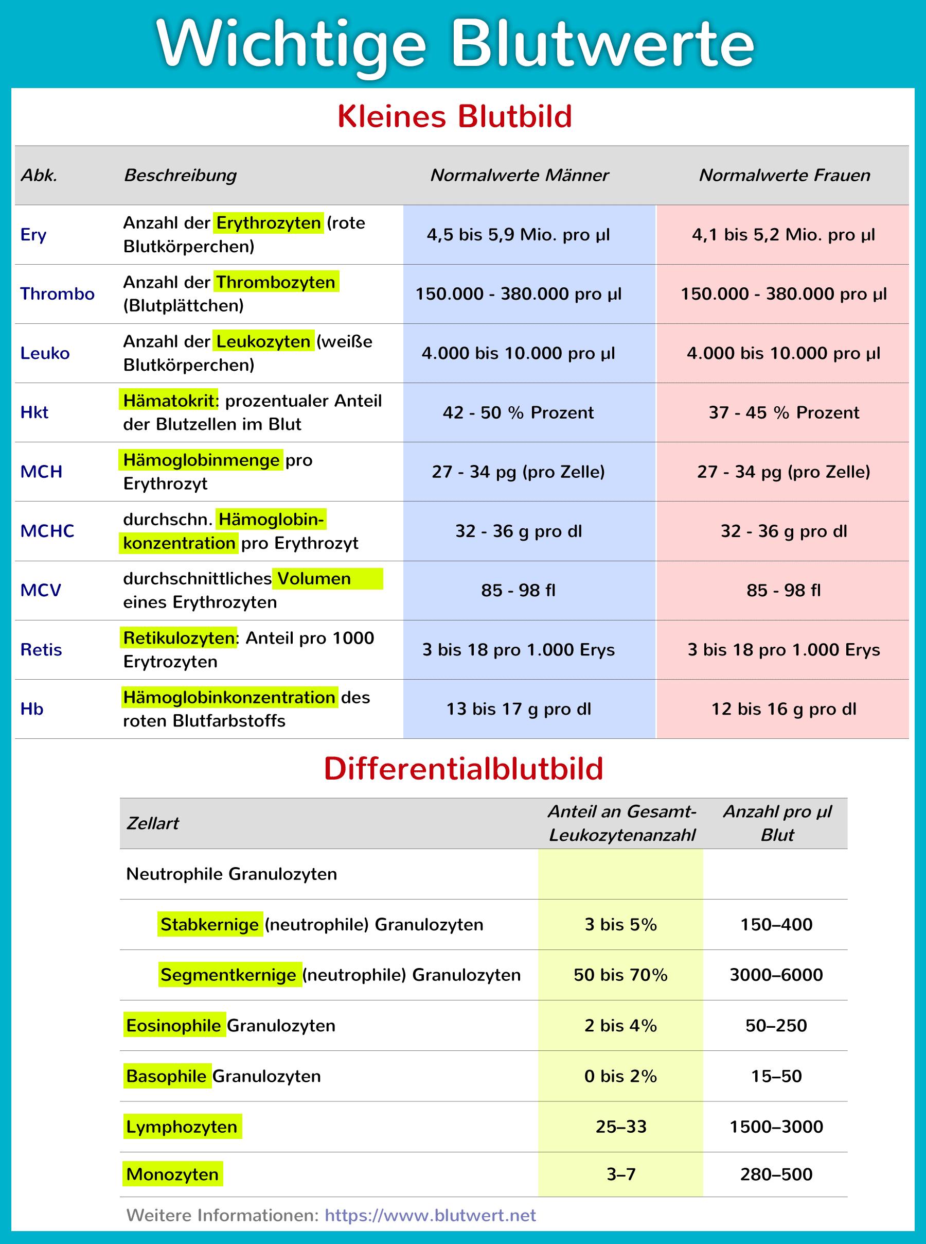 Blutwerte Und Ihre Bedeutung